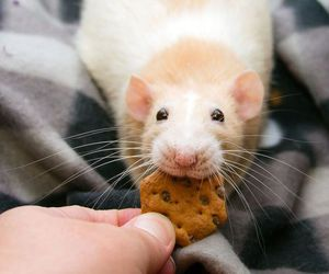 animal, cookie, and cute image