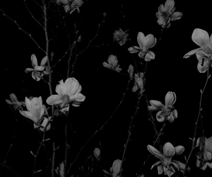 black, black and white, and flowers image