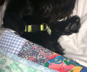 dog, mood, and cute image