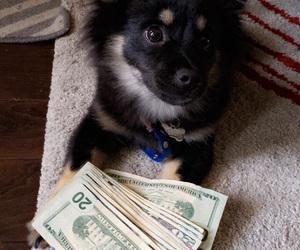 animals, dog, and goals image