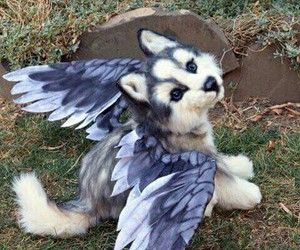 dog, wings, and animal image