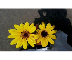 flores, photography, and primavera image
