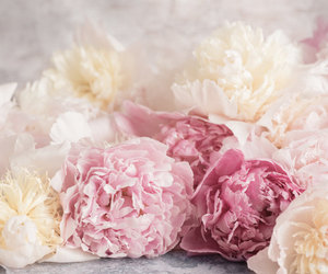 peony and pink flowers image