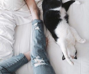 cat, jeans, and bed image