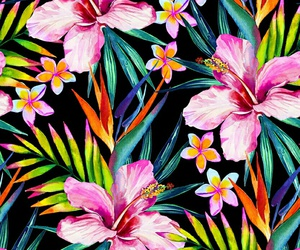 flores, pretty, and flowers image
