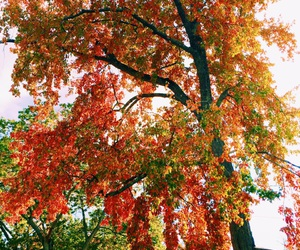 colors and fall image