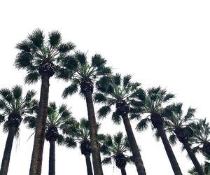 california, summer, and palmeiras image