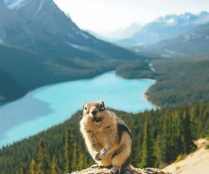 nature, animal, and travel image
