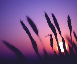 sunset, nature, and sun image