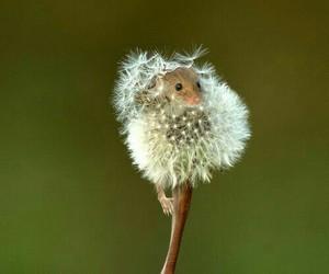 animal, baby, and dandelion image