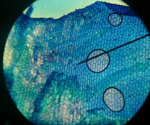 biology, green, and microscope image