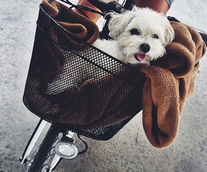 bicycle, puppy, and bike image