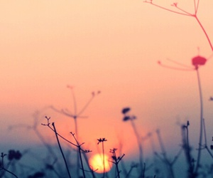 sun, flowers, and sunset image