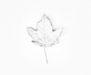 white and tumblr image