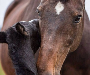 baby, horse, and cute image