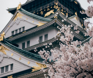 flowers, japan, and osaka image