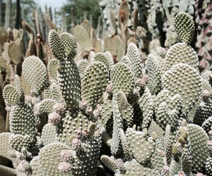 cactus, green, and pink image