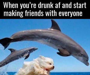dog, dolphin, and drunk image