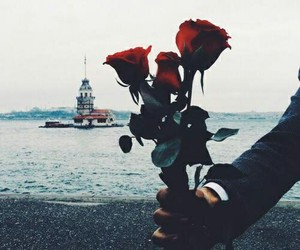 rose, istanbul, and flowers image