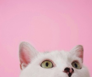 cat, pink, and animal image