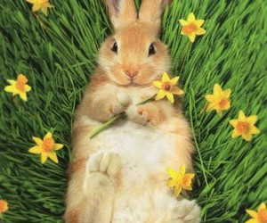 bunny, cute animals, and rabbit image