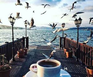coffee, bird, and sea image