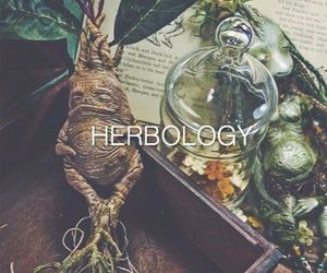 harry potter, herbology, and hogwarts image