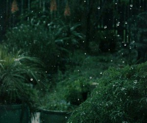 rain, green, and nature image