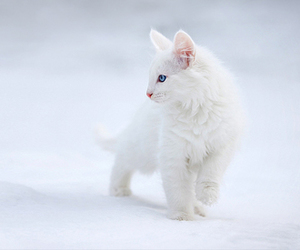 cat, cats, and winter image