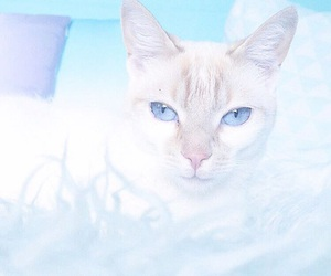 blue, cat, and pastel image