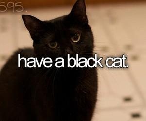 black cat, cat, and bucket list image