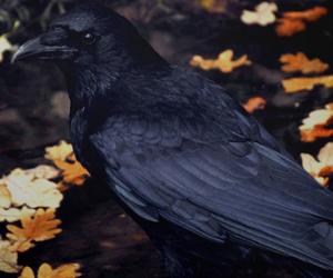 autumn and bird image