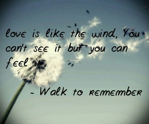 feel, wind, and love image