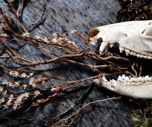 bone, flowers, and gothic image