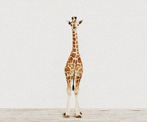 giraffe, animals, and cute image