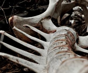 bone, bones, and nightmare image