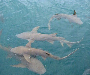 shark, blue, and aesthetic image