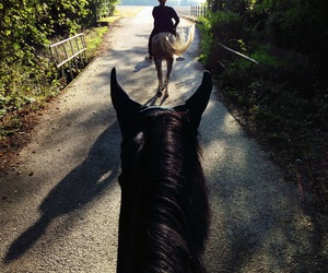 autumn, horse, and horse riding image