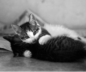 animals, black and white, and cats image