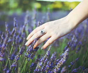 flowers, green, and lavender image