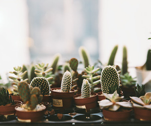 cactus, plants, and nature image