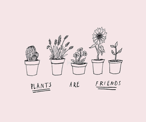 cactus, flowers, and friends image