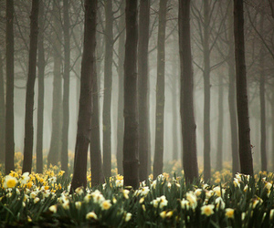 daffodils and forest image