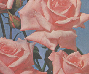 roses and vintage image