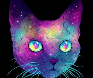 cat, kitty, and purple image