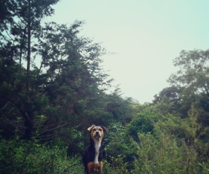 costa rica, rescued, and dog image