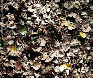autumn, tumblr, and love image