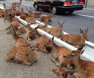 deer, animal, and aesthetic image
