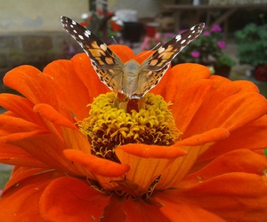 buterfly, flowe, and photobyme image