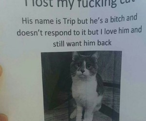 cat, funny, and lost image